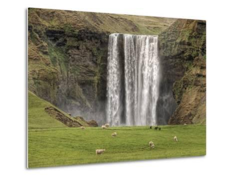 Skogarfoss with grazing sheep--Metal Print