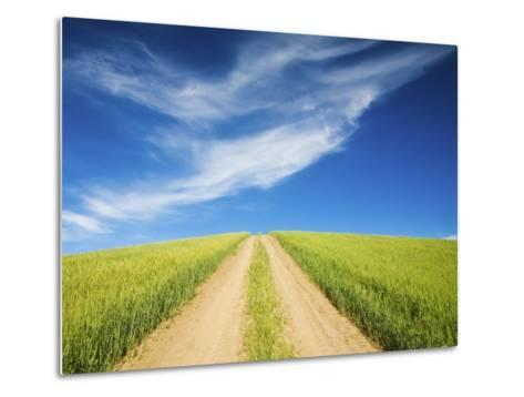 Country Back Road Through Spring Wheat Fields-Terry Eggers-Metal Print