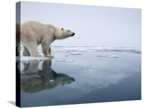 Polar Bear on Melting Ice, Svalbard, Norway-Paul Souders-Stretched Canvas Print