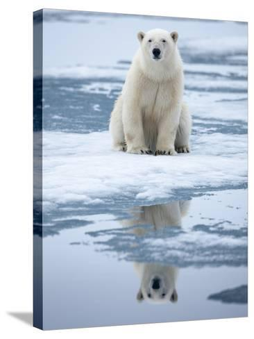 Polar Bear on ice-Paul Souders-Stretched Canvas Print