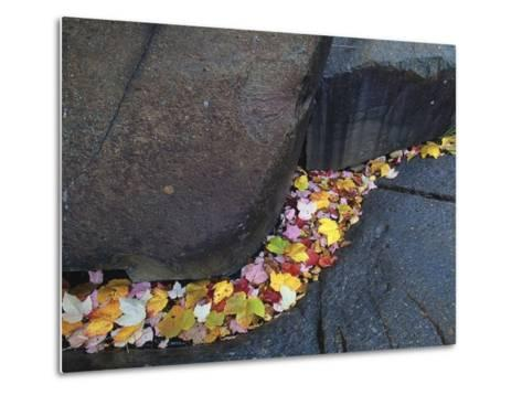 Red Maple Leaves at Onaping Falls Near Onaping, Ontario, Canada-Mike Grandmaison-Metal Print