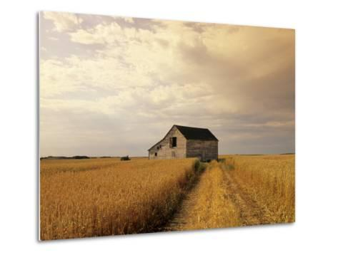 Old Barn in Maturing Spring Wheat Field, Tiger Hills, Manitoba, Canada.-Dave Reede-Metal Print