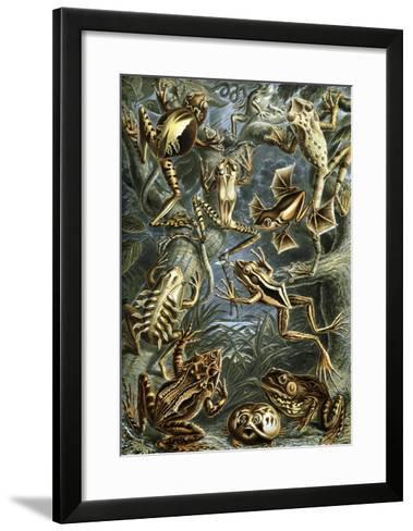 Illustration of Batrachia by Ernst Haeckel--Framed Art Print
