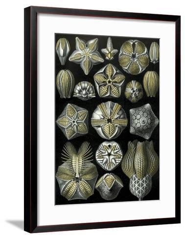 Illustration of Blastoidea by Ernst Haeckel--Framed Art Print
