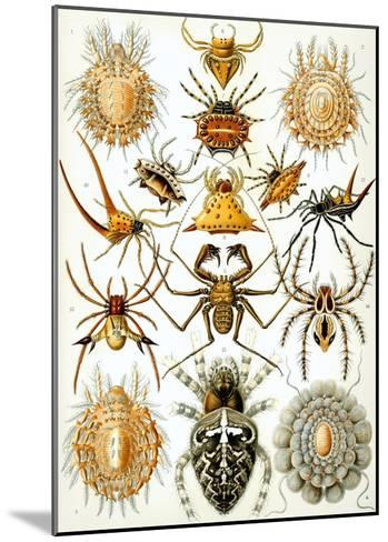 Illustration of Arachnida by Ernst Haeckel--Mounted Giclee Print