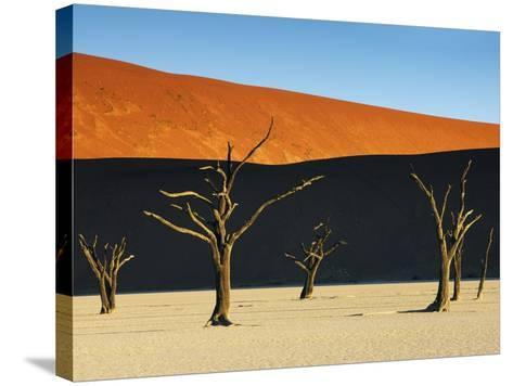 Bare trees at Dead Vlei-Frank Krahmer-Stretched Canvas Print