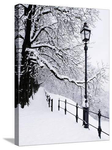 Trees and lamp post in snow-Bruno Ehrs-Stretched Canvas Print