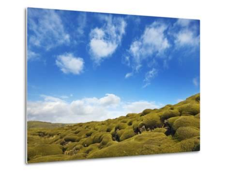 Moss landscape over lava field-Frank Krahmer-Metal Print