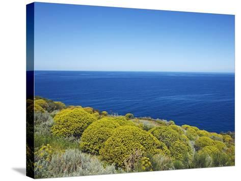 Tree spurge on Stromboli Island-Frank Krahmer-Stretched Canvas Print