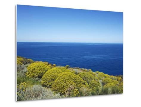Tree spurge on Stromboli Island-Frank Krahmer-Metal Print