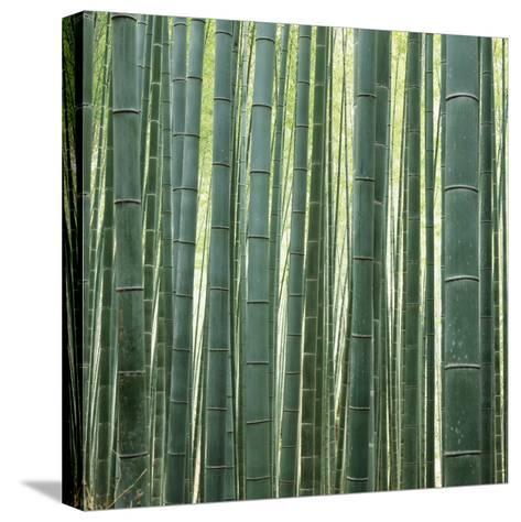 Bamoo Forest in Kyoto-Micha Pawlitzki-Stretched Canvas Print