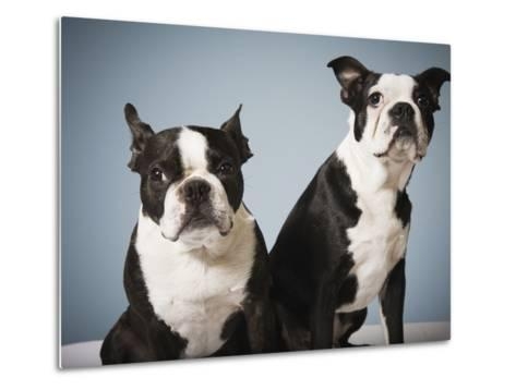 Portrait of two dogs sitting--Metal Print