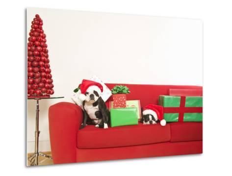 Dogs and Christmas gifts on sofa--Metal Print