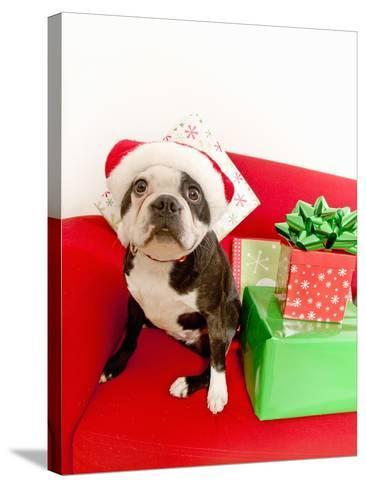 Dog wearing Santa Claus hat next to gifts--Stretched Canvas Print