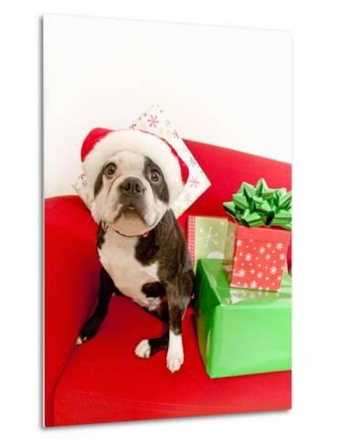 Dog wearing Santa Claus hat next to gifts--Metal Print