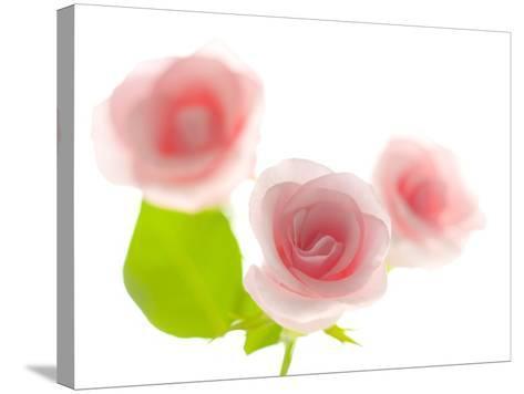 Pink rose-Kiyoshi Miyagawa-Stretched Canvas Print