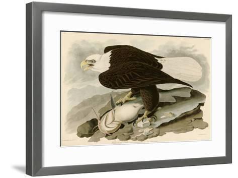 White Headed Eagle-John James Audubon-Framed Art Print