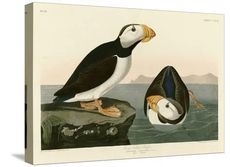 Large Billed Puffin-John James Audubon-Stretched Canvas Print