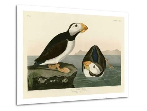 Large Billed Puffin-John James Audubon-Metal Print