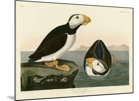 Large Billed Puffin-John James Audubon-Mounted Giclee Print