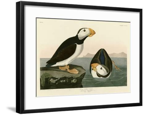 Large Billed Puffin-John James Audubon-Framed Art Print