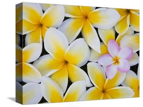 Frangipani Flowers-Darrell Gulin-Stretched Canvas Print