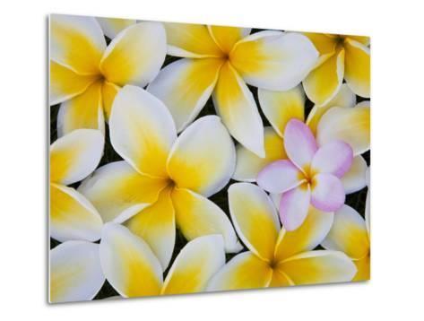 Frangipani Flowers-Darrell Gulin-Metal Print