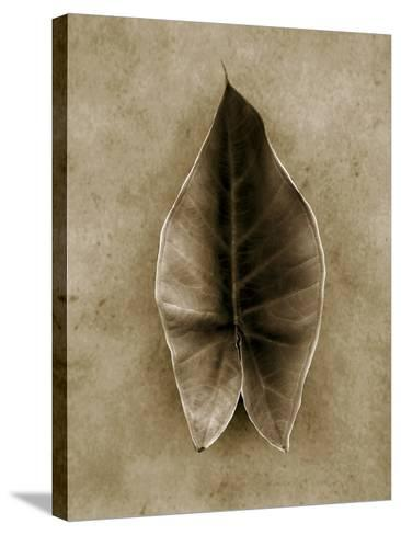 Elephant Ear-John Kuss-Stretched Canvas Print