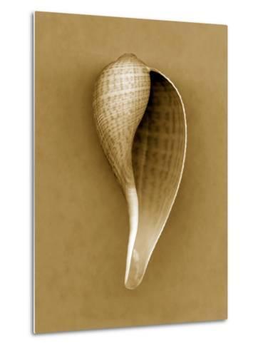 Graceful Fig Shell-John Kuss-Metal Print