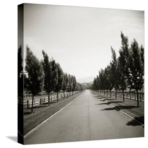 Napa Valley-John Kuss-Stretched Canvas Print