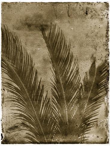 Sago Palm-John Kuss-Stretched Canvas Print