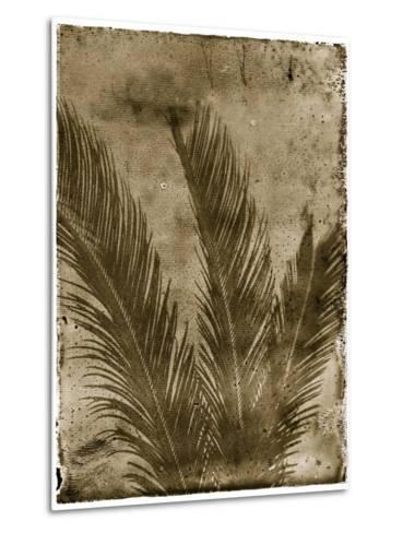 Sago Palm-John Kuss-Metal Print