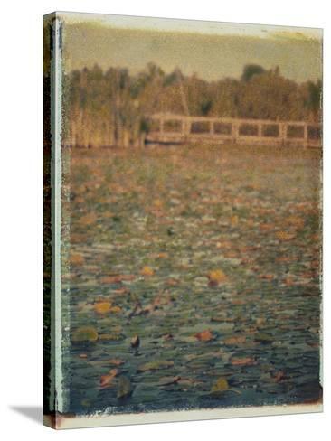 Foster Island Lily Pads-Jennifer Kennard-Stretched Canvas Print