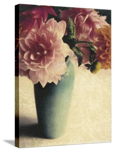 Patrick's Dahlias-Jennifer Kennard-Stretched Canvas Print