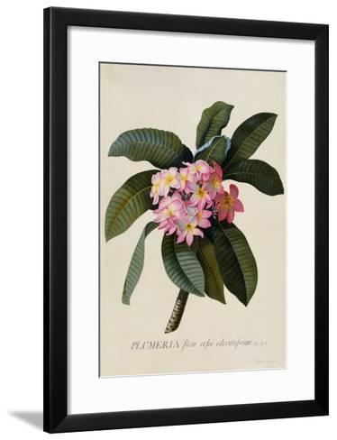 Botanical Print of Frangipani-Johann Wilhelm Weinmann-Framed Art Print