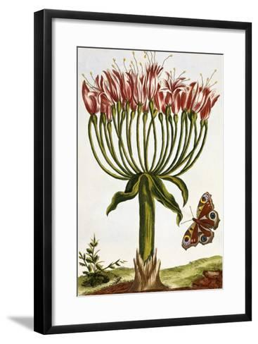 18th Century French Print of La Brunswick and Butterfly-Stapleton Collection-Framed Art Print