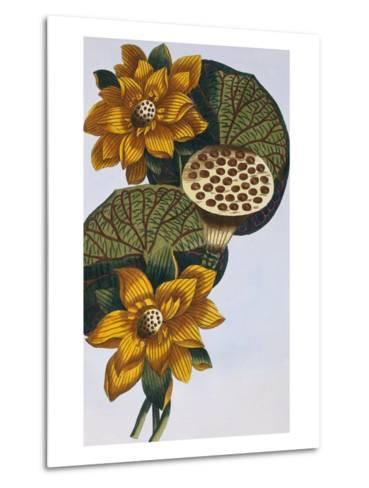 18th Century French Print of Waterlily-Stapleton Collection-Metal Print