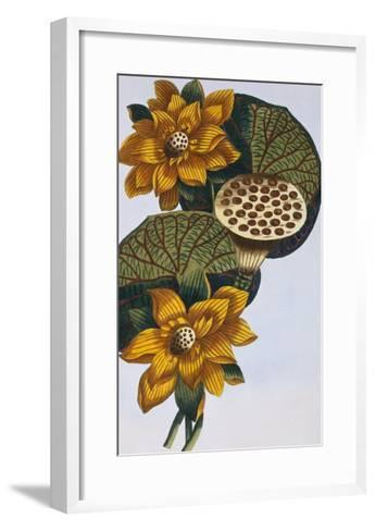18th Century French Print of Waterlily-Stapleton Collection-Framed Art Print