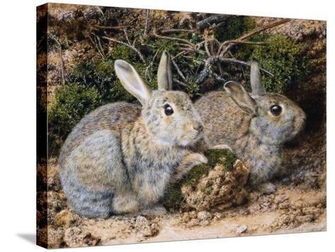Two Rabbits-John Sherrin-Stretched Canvas Print