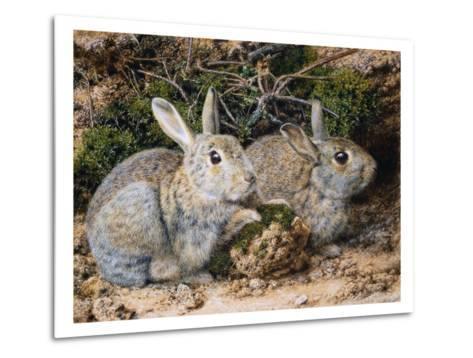 Two Rabbits-John Sherrin-Metal Print