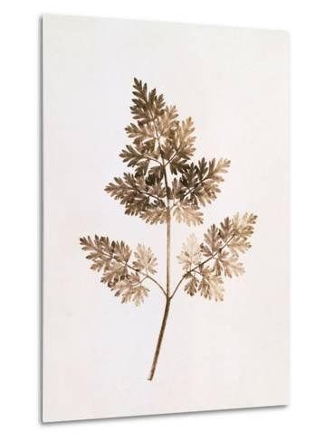 Fronds of Leaves-William Henry Fox Talbot-Metal Print