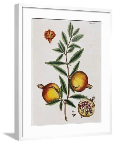 Pomegranate-Elizabeth Blackwell-Framed Art Print