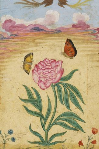 Mughal Miniature Painting Depicting a Peony with Birds of Paradise and Butterflies-Stapleton Collection-Stretched Canvas Print