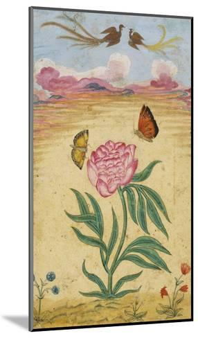 Mughal Miniature Painting Depicting a Peony with Birds of Paradise and Butterflies-Stapleton Collection-Mounted Giclee Print