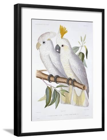 Print of Two Cockatoos by A. Dumenil-Stapleton Collection-Framed Art Print