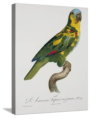 Print of an Amazon Parrot by Jacques Barraband-Stapleton Collection-Stretched Canvas Print