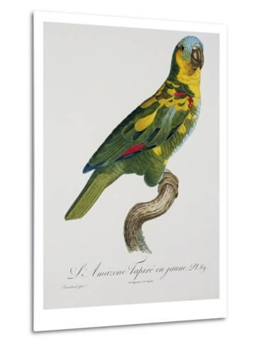 Print of an Amazon Parrot by Jacques Barraband-Stapleton Collection-Metal Print