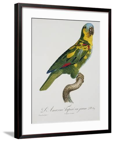 Print of an Amazon Parrot by Jacques Barraband-Stapleton Collection-Framed Art Print
