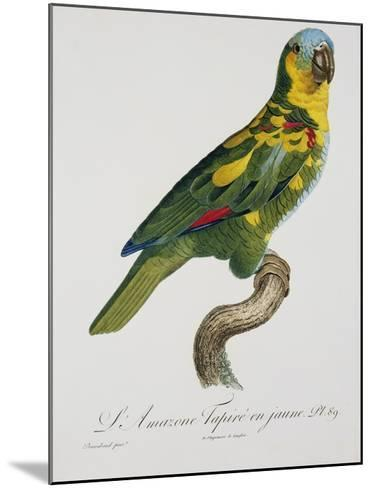 Print of an Amazon Parrot by Jacques Barraband-Stapleton Collection-Mounted Giclee Print