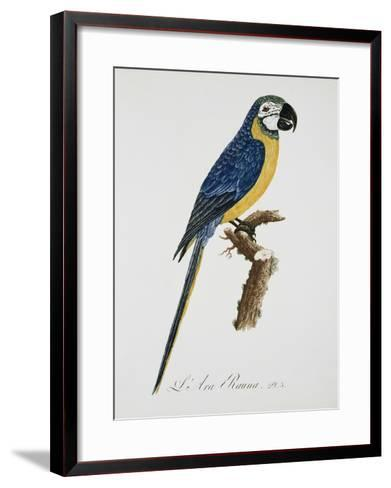 Blue and Gold Macaw-Jacques Barraband-Framed Art Print